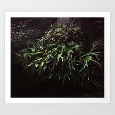 Botaical Garden Art Print