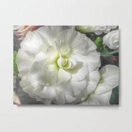 White Begonia Flower Metal Print