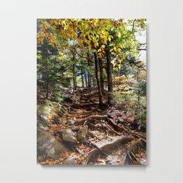 Roots - Mount Major NH Metal Print