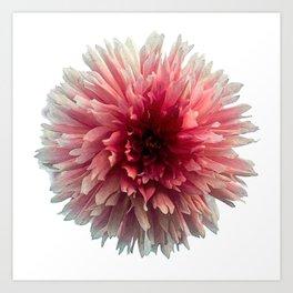 Dahila Red, Pink & White Art Print