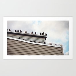 Pigeons on the roof Art Print