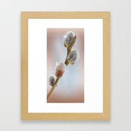 Pussy willow 069 Framed Art Print