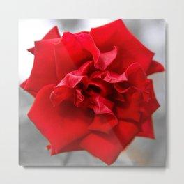 Rose in Red.... Metal Print