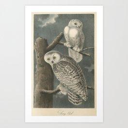 Vintage Illustration of Snowy Owls (1840) Art Print