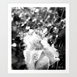 Bushy tail squirrel Art Print