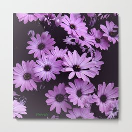 Black & Lilac Color Purple Daisies Metal Print