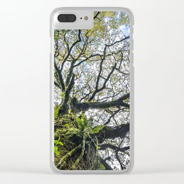 Centenary oak with the trunk covered in moss and green plants Clear iPhone Case