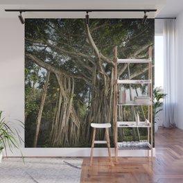 Banyan Tree at Bonnet House Wall Mural