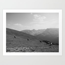 Rams, FILM Art Print