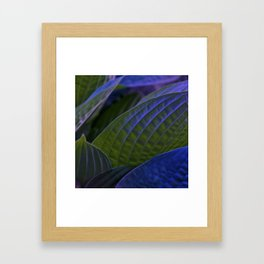 Hosta Framed Art Print