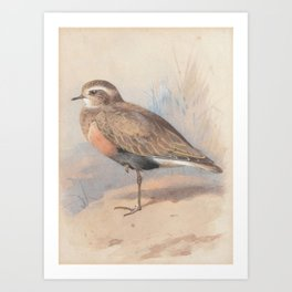 Archibald Thorburn (1860-1935) A Ruff; with another wading bird Art Print
