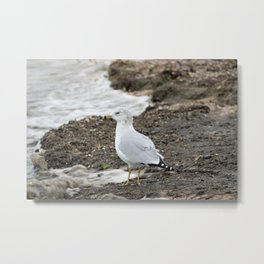 Seagull on the Shore of Lake Michigan Metal Print