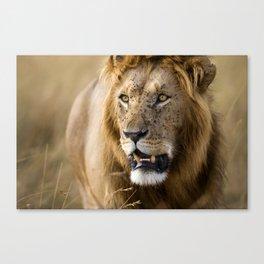 Lion, Masai Mara Canvas Print