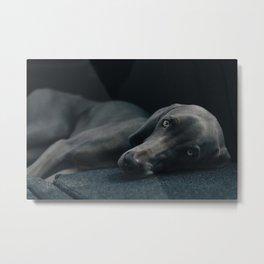 Canine 10 Metal Print