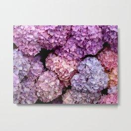 Spring Hydrangeas Metal Print