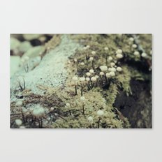 Toadstool Forest No. 2 Canvas Print