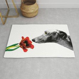 Italian Greyhound smelling flower Rug