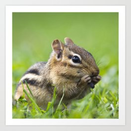 Cute Chipmunk Art Print