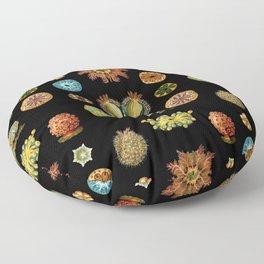 Ernst Haeckel - Scientific Illustration - Ascidiae Floor Pillow
