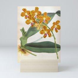 Vanda Parishii Orange Speckled Lindenia Orchid Mini Art Print