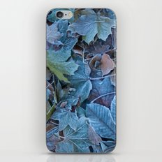 Frosted leaves iPhone & iPod Skin