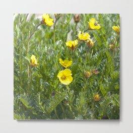 Watercolor Flower, Alpine Avens 01, RMNP, Colorado Metal Print