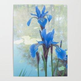 Blue Iris, The Dancing Spirit Of Early Summer Poster