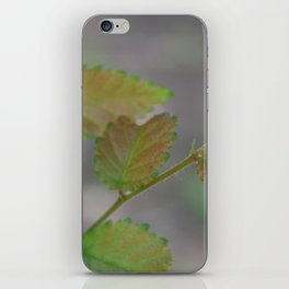 Transitioning Leaves iPhone Skin