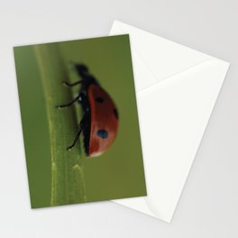 Ladybird on a Flower, macro photography, home, still life, fine art, animal love, nature photo Stationery Cards