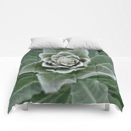 Golden Ratio in a Wild Weed Comforters