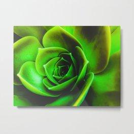 closeup green succulent plant texture Metal Print