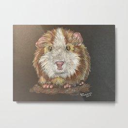 Guinea Pig Stare Metal Print