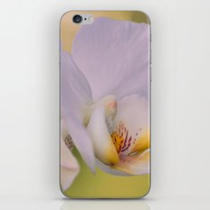 Orchid Dreams iPhone & iPod Skin
