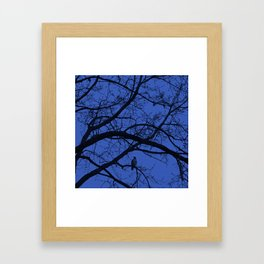Hawk in Tree Framed Art Print