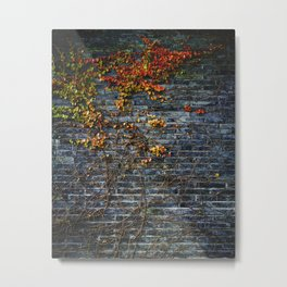 Vines on a Brick Wall (Color) Metal Print