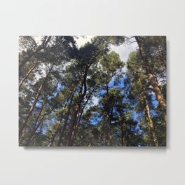 Canopy. Rushmere Park, Bedfordshire Metal Print