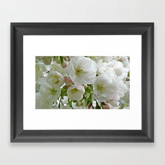 Cherry blossom in oil Framed Art Print
