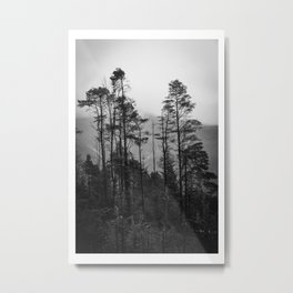 Mountain view through trees Metal Print
