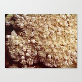 Xenia Coral Pulsing Canvas Print