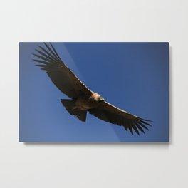 Peruvian Condor Metal Print