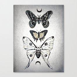 Moonwings Canvas Print