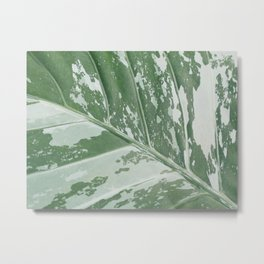 Leafy Abstract Metal Print