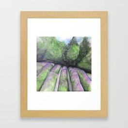 Rows of Lavender Framed Art Print