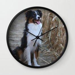 Australian Shepherd in the Nature Wall Clock