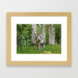 The cat has been a walk in the birch forest. Framed Art Print