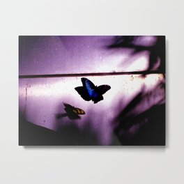 Iron Butterfly Metal Print