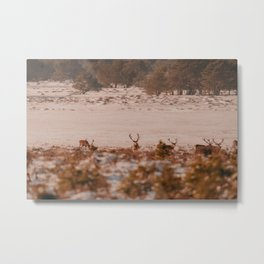 Edelherten // Veluwe Metal Print