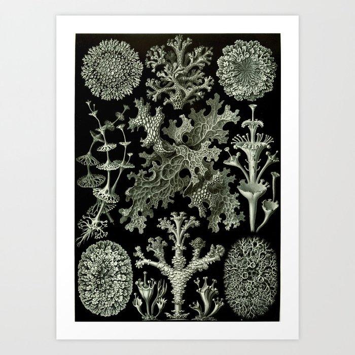 Naturalist Lichen Kunstdrucke