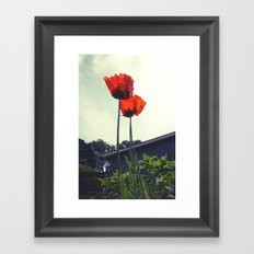 Red Poppies Flowers Color Photo Framed Art Print