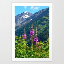 Fireweed ~ Mid-Summer Art Print